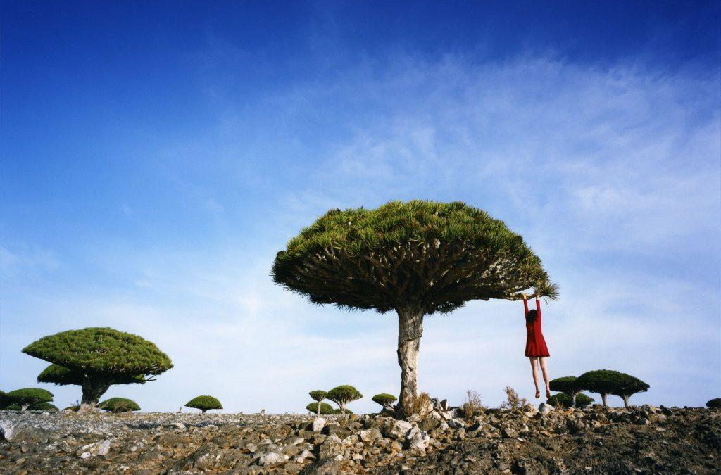 Fotografe reist bijzondere bomen achterna