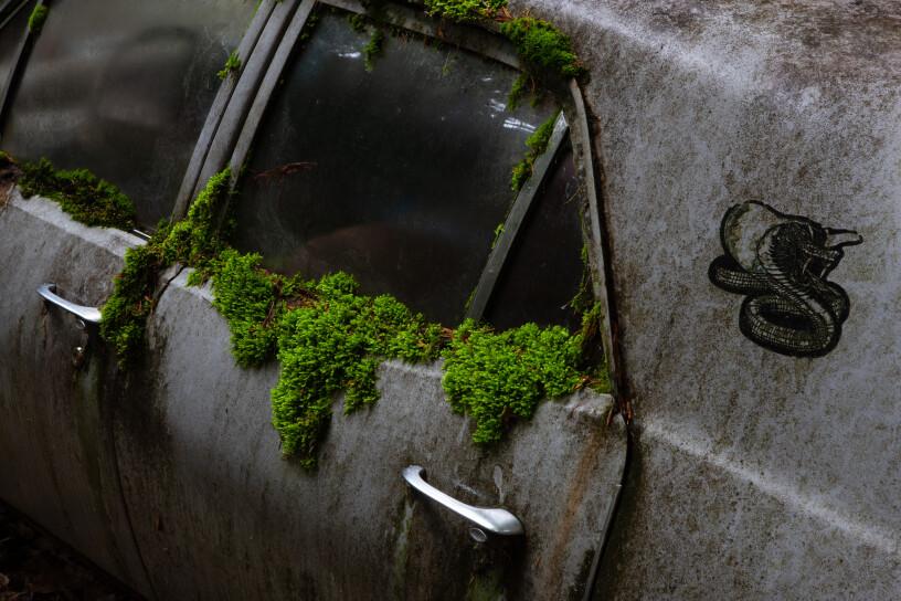 Autowrakken in het bos, omarmd door de natuur